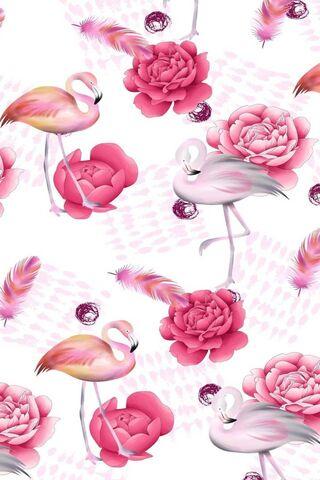 Hot Flamingo