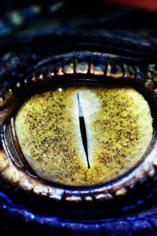 पशु की आँख