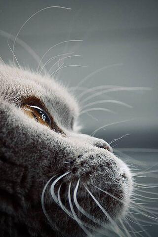 مايا القط