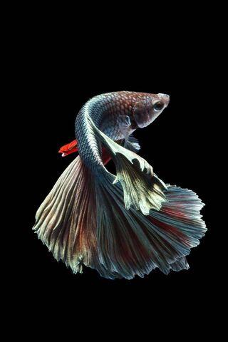 Champion Fish 6s-7
