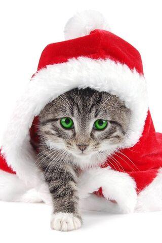 Boże Narodzenie Cat