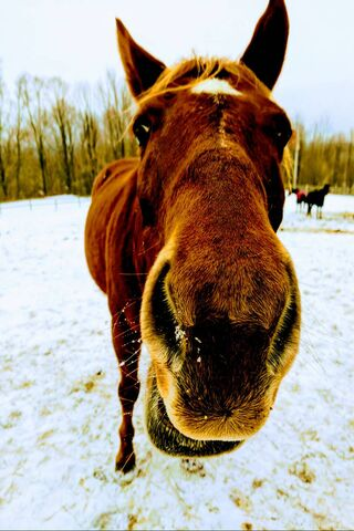 Pony Lucky