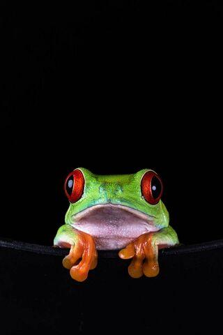 Frog Background