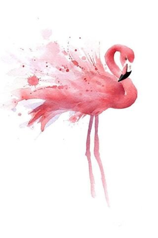 粉红色的火烈鸟