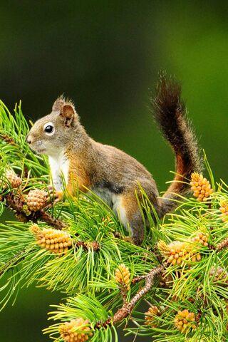 나무에 다람쥐