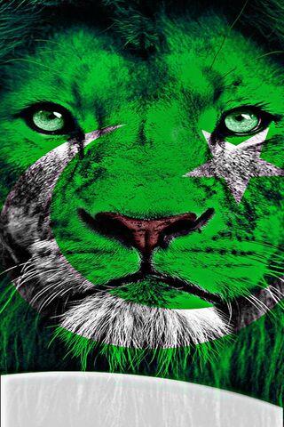 Pakistan Flag King