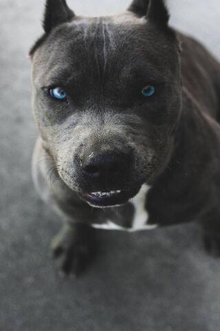 Anjing liar