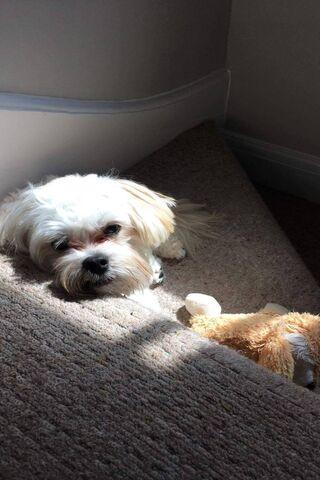 Sunseeker Pup