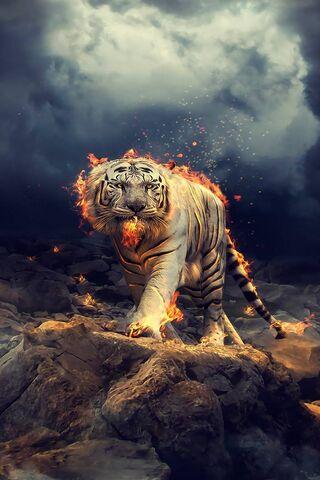 Membakar harimau