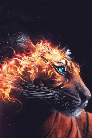 Membakar Kepala Tiger
