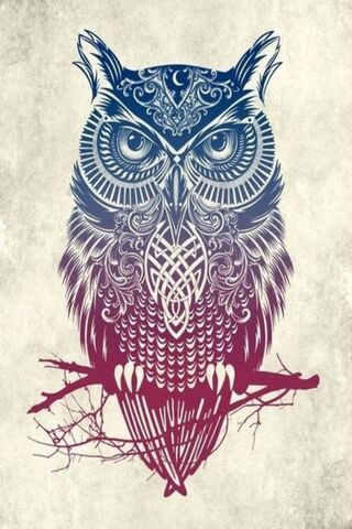 Hd Owl Design