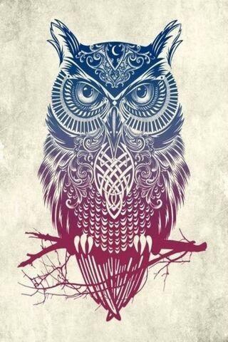 Hd Owl Design