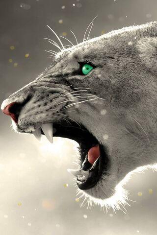 Singa Mad