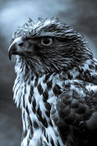 Động vật chim đại bàng