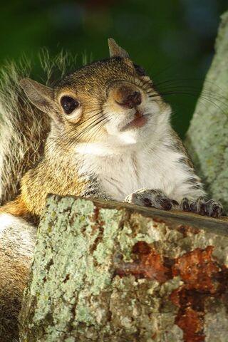 Squirrel Portrait