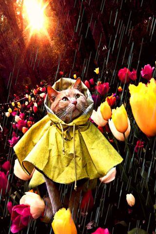 Bunga Kucing
