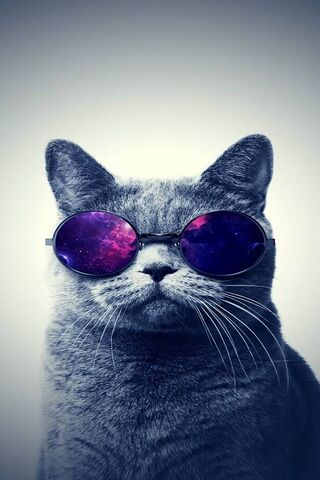 Kucing sejuk