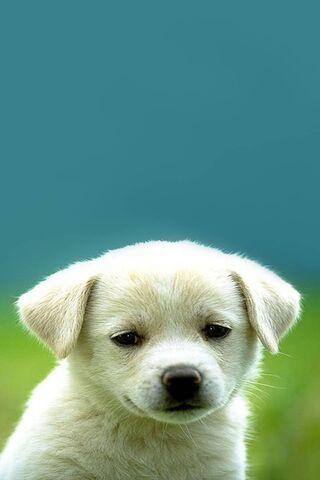 Cucciolo Carino