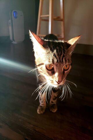 धूप की बिल्ली