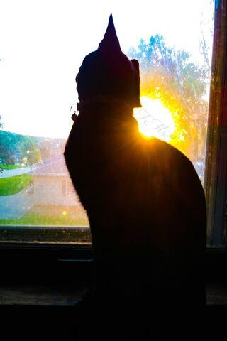 Loki Sunset