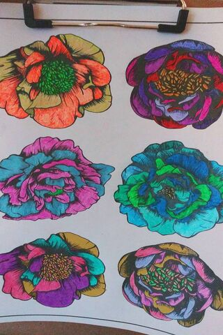 6 Colorful Flowers