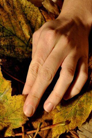 शरद ऋतु में हाथ