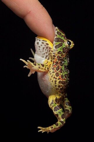 Frogs Eat Humans