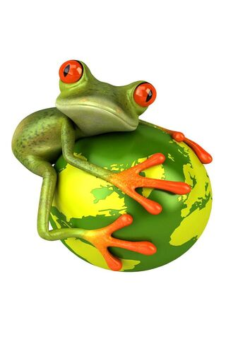 Funny Frog On Globe