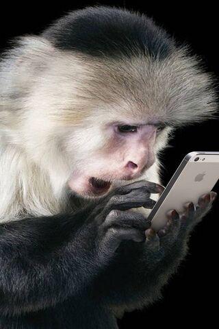 Monkey Use Iphone 5