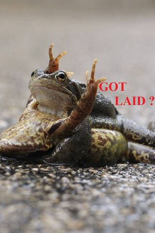 Frog Funny