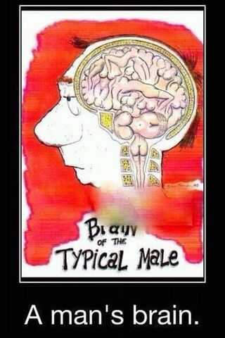 Typical Brain Of Men