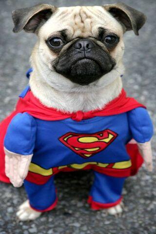 Super Carlin