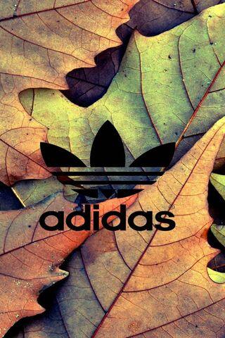 秋のアディダス