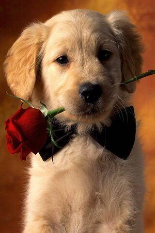 Sevimli köpek yavrusu