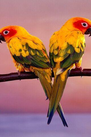 นก Loove