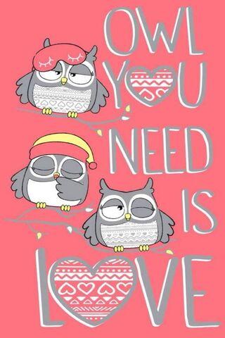 Baykuş aşk