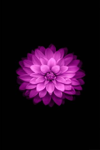Iphone Lotus Black