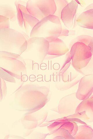 粉红玫瑰花瓣