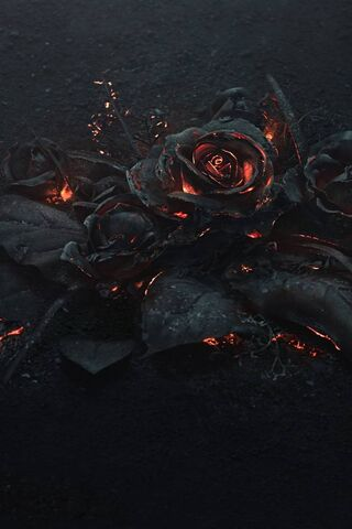 Membakar Mawar