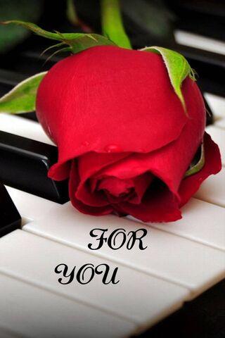Senin için