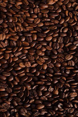कॉफ़ी के बीज