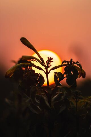 Fierce Sunset