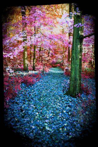 जादू का जंगल