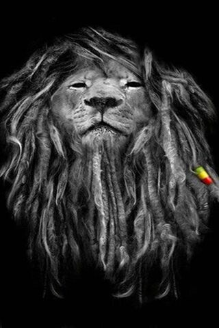 สิงโต Rasta