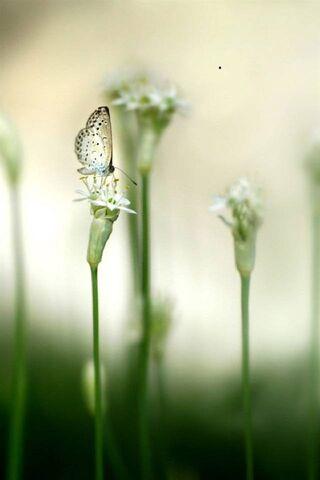 Papillon de fleurs