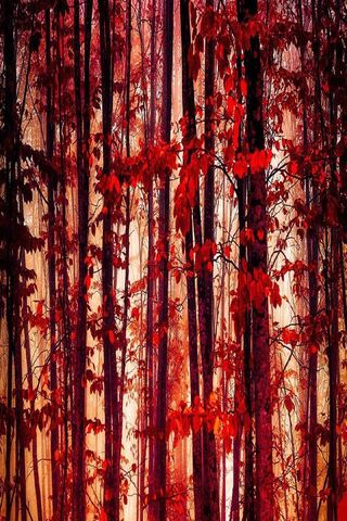 वन के पेड़ लाल