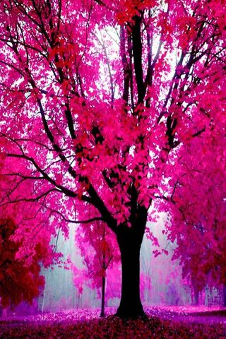 Pink Autumn Tree