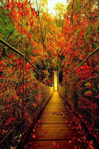 الخريف الغابات الجسر