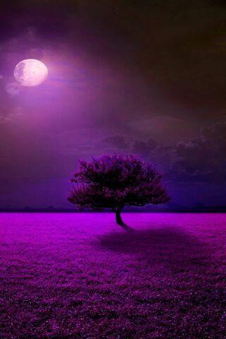 Luz da lua roxa