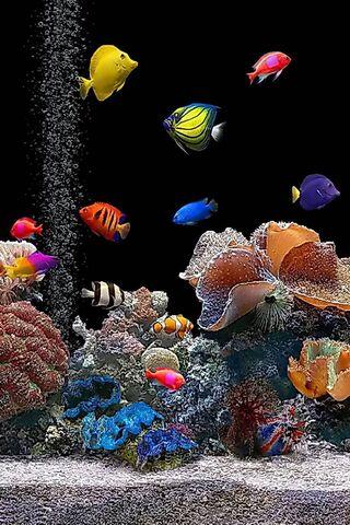 Live Aquarium